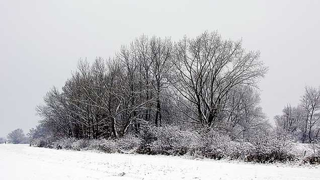 Winter | Winterlandschaft